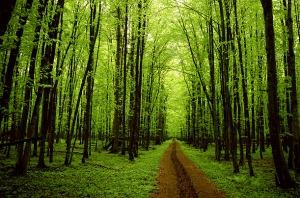 48_look_trees