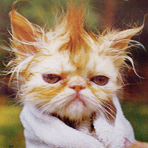 87_bad hair day