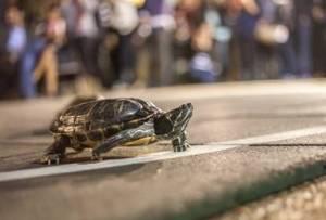 98_tortoise